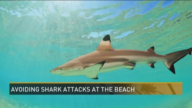 The Carolina Beaches Where Sharks Are Lurking