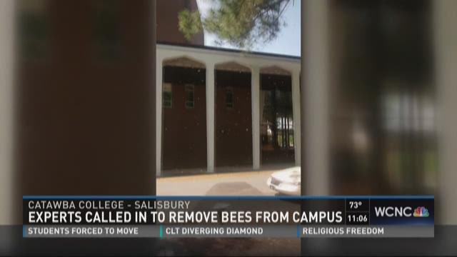 Experts called in to remove bees from campus