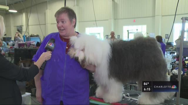Victory Lane Classic Dog Show