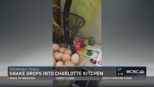 Snake drops into Charlotte kitchen