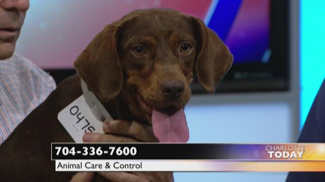 Help Coffee find a home!