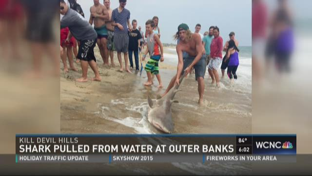 Shark pulled from water at Outer Banks
