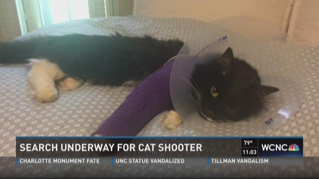 Search underway for cat shooter
