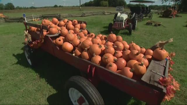 Drought impacting pumpkin crop